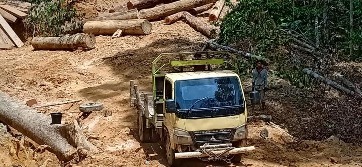 Jikalahari : Aparat Segera Turun, Tangkap Penjarah Hutan Bukit Betabuh