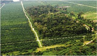 Gubri Seriusi One Map Policy Perizinan Lokasi dan Perkebunan