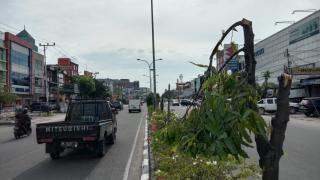 Tak Terpantau CCTV, Mampukah Polisi Tangkap Penebang 83 Batang Pohon?