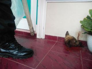 Jaksa Temukan Pisau dan Kepala Anjing di Teras Rumah